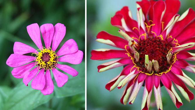 KwaZulu Natal - Flowers in the Midlands