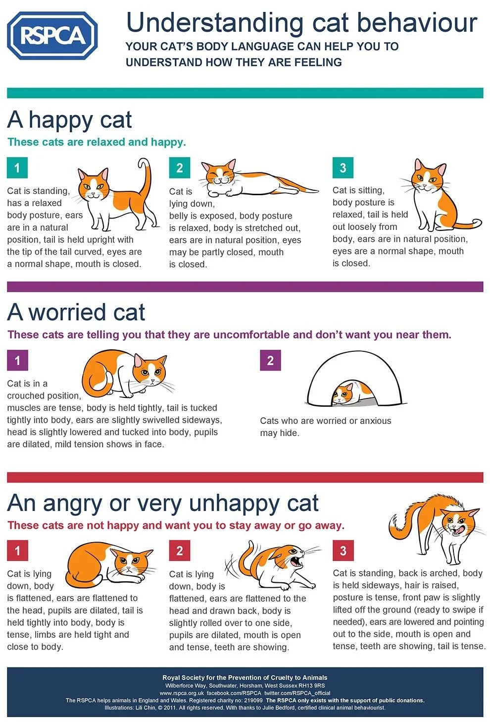 cat-body-language-infographic