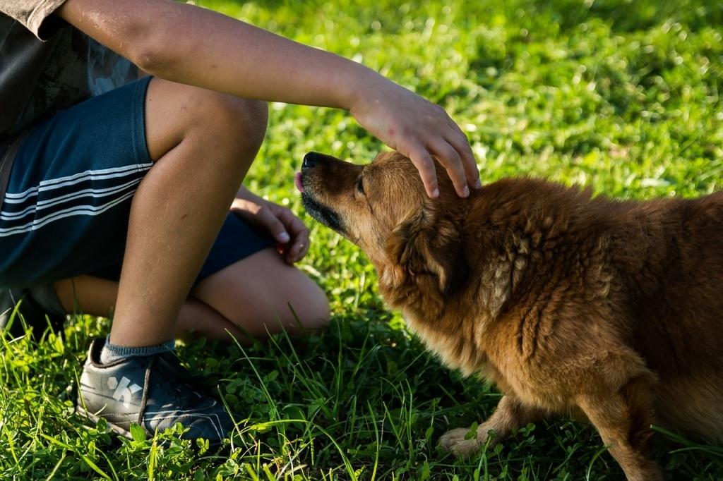 dog-454145_1280