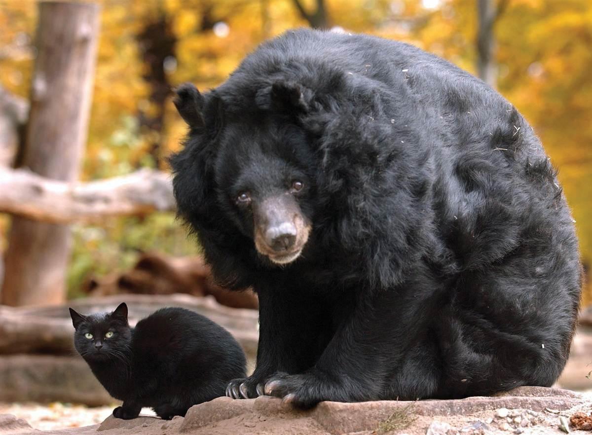 kitty bear