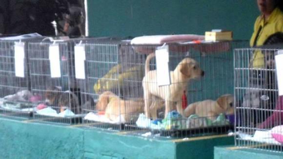 onca-cães-abandono-curitiba-honjo-adote