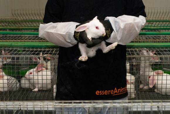 Ativistas-italianos-libertam-12-coelhos-expoem-indústria-da-carne