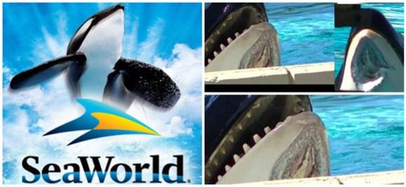 seaworld-eleita-empresa-mais-odiada-dos-estados-unidos-parque-aquatico-orlando-california-sea-world