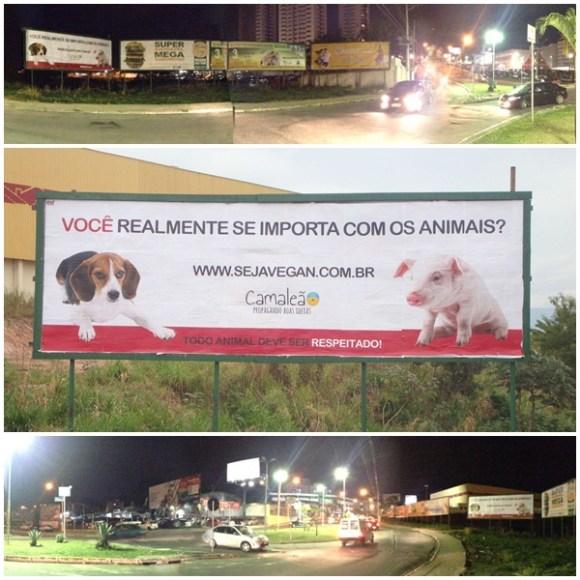 camaleao-coloca-outdoor-sobre-direitos-animais-veganismo-no-vale-do-paraíba-taubaté-especismo-taubaté-vale-paraíba