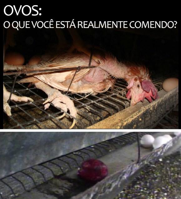 ovos-o-que-voce-esta-realmente-comendo-consumo-ovos-galinhas-veganismo-crueldade-ovolactovegetarianismo-vegetarianismo