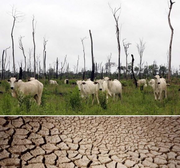 o-papel-da-pecuaria-em-nossa-crise-hidrica-desertificação-cantareira-impacto-ambiental-pecuaria-veganismo