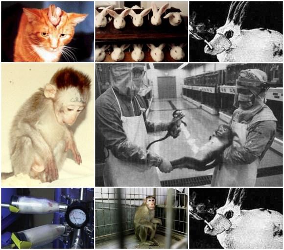 pode-a-experimentacao-animal-ser-considerada-etica-testes-animais-ética-animal-ceua-concea-comité-ético