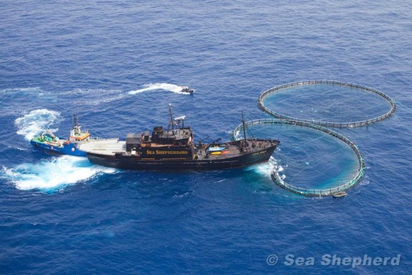 ong-defesa-dos-oceanos-animais-marinhos-ambientalistas-conservacionistas-ecologistas-sea-shepherd