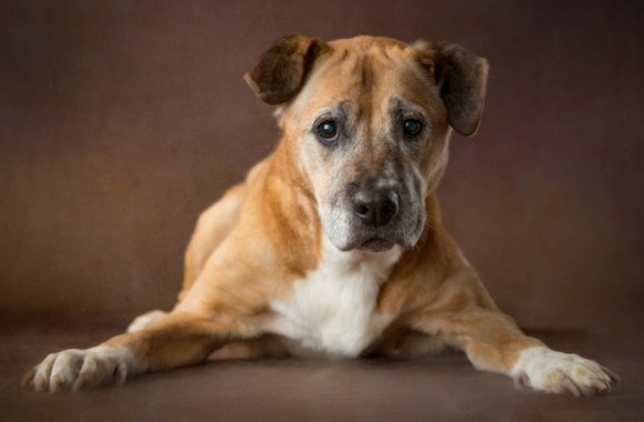 Emily-cachorros-velhinhos-ganham-fotografia-para-estimular-a-adocao-adote-não-compre