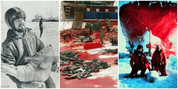 Greenpeace-Sea-Shepherd-Paul-Watson-David-Garrick-Robert-Hunter-baby-seals-caça-focas-ambientalistas-canada-china-Jon-Burgwald