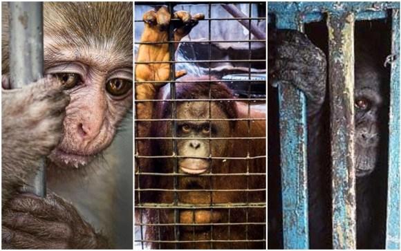 zoologicos-conservação-especies-meio-ambiente-natureza-educação-brasil-são-paulo-preservação-natureza-visitas