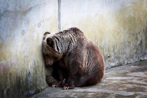 zoologicos-matam-animais-considerados-nao-rentaveis-zoocose-tedio-stress-veganismo-direitos-animais