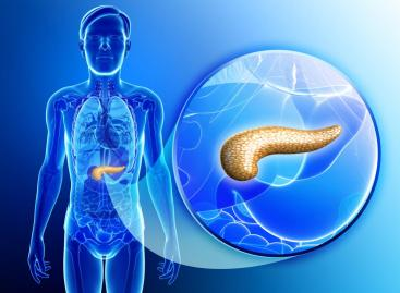 Pancreas: Functions and disorders