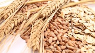 Whole grains may lead to a healthier gut, better immune responses