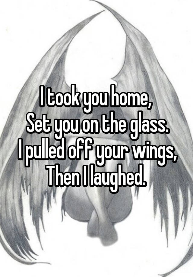 i took you home set you on the glass i pulled off your wings then i laughed