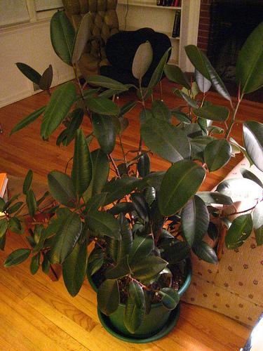 Indoor Water Plants India