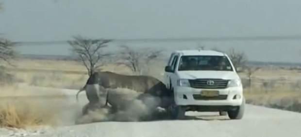 Imagen del momento en el rinoceronte embiste el vehículo