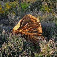 El CDAN de Huesca ofrece 'Paisaje interior, paisaje exterior'