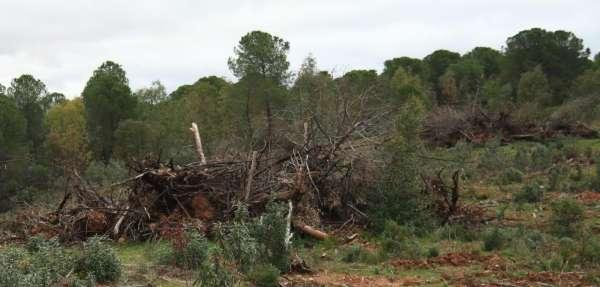 Ecologistas y Ayuntamiento de Zalamea piden parar la eliminación de masa forestal en una finca de la localidad