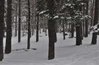 Activada la alerta amarilla por nieve y deshielo en el Pirineo oscense