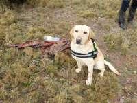 La Unidad Canina Antiveneno realiza más de 170 actuaciones
