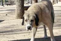 Denunciados dos Centros de Protección Animal por irregularidades en materia sanitaria