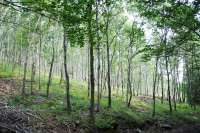Una exposición muestra la importancia de proteger el arbolado monumental y los bosques maduros aragoneses