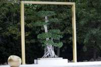 La exposición de 50 bonsais y prebonsais autóctonos se puede visitar hasta este domingo