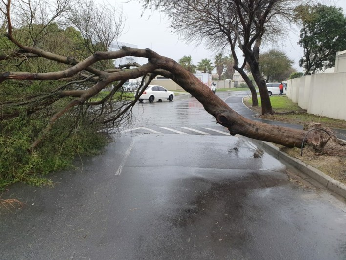 A tree fell over in Parklands, Cape Town, during the storm.