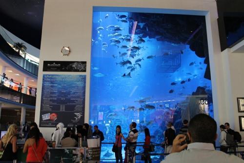 入口がこちら。<br /><br />入場料金にはいくつかのグレードがあり、<br />水族館の裏側で魚に餌付けをする体験コースや、<br />床がガラス張りのボートに乗っての餌付け体験が含まれているものがあります。