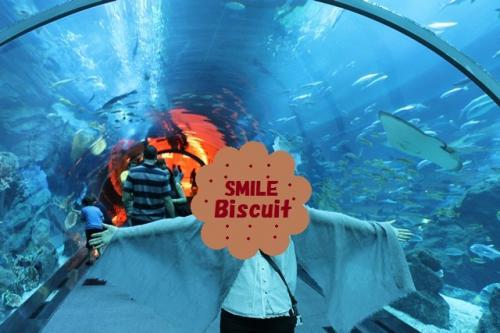大水槽の中にある、トンネル。<br />エイやサメが泳いでます。