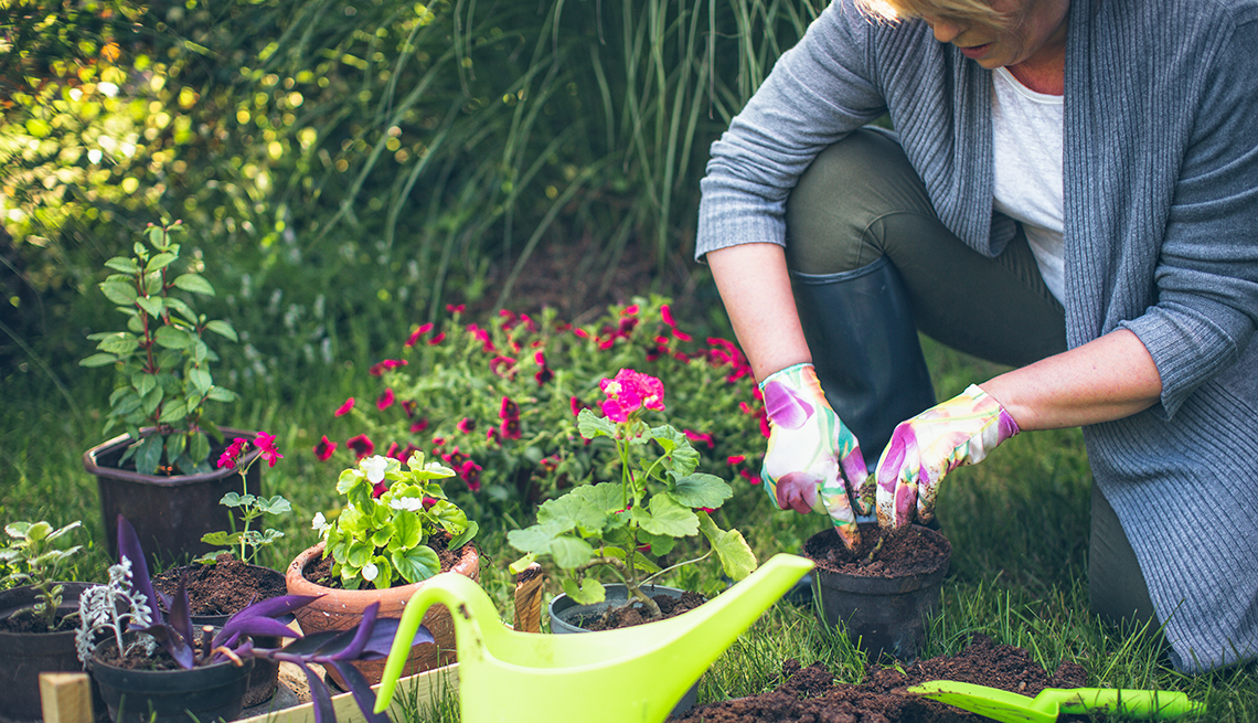 5 Benefits Of Growing http://crispinvasives.ca/index.php/action/horticulture-industry/ Fresh Flowers At Home