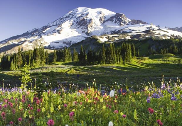 Flores silvestres en Mount Rainier, Washington, Frommers hermosas montañas