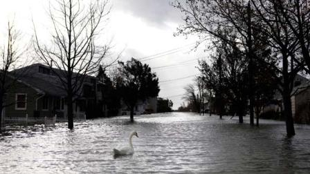 A swan makes its way down a flooded street in the aftermath of superstorm Sandy, Tuesday, Oct. 30, 2012, in Lindenhurst, N.Y.