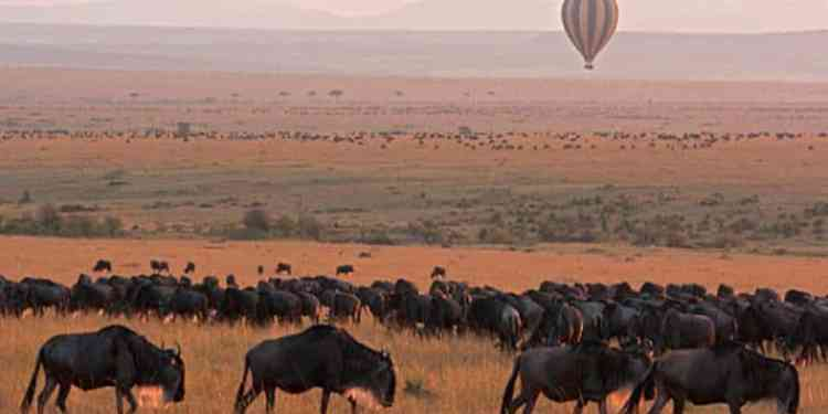 Best Time To Catch The Great Migration