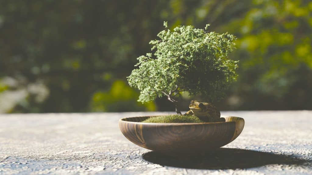 A bonsai plant being enjoyed by a frog (Image Credits: Monoar / Pixabay)