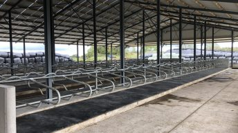 Buildings Focus: 'Biting the bullet' by building a 150-cubicle shed in Co. Offaly