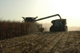 Corn being harvested.