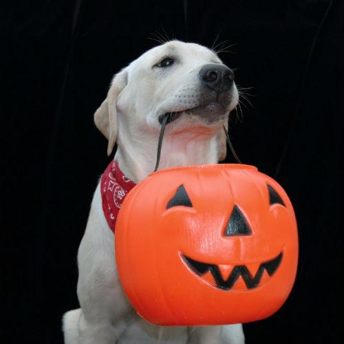 dog with halloween bucket