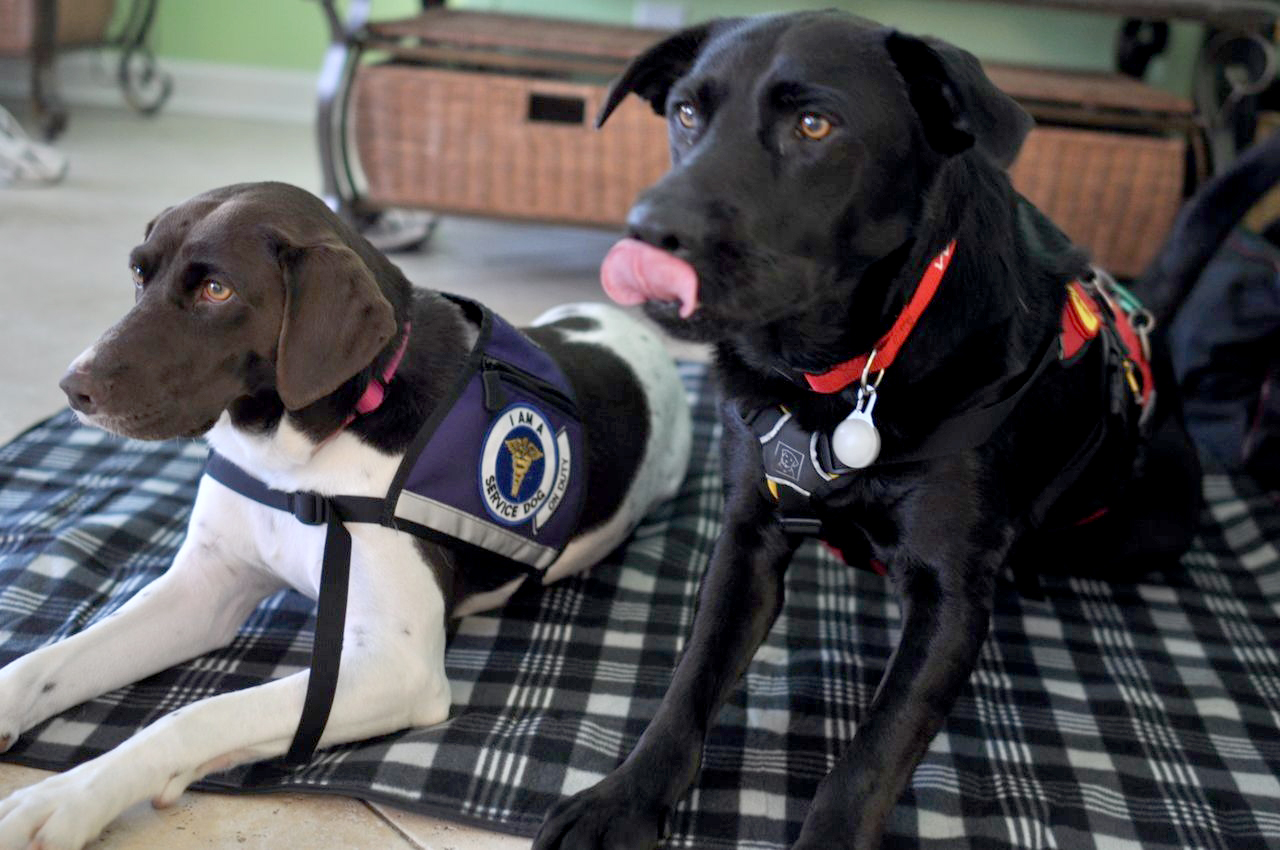 Service Dog Training 101 Everything You Need To Know
