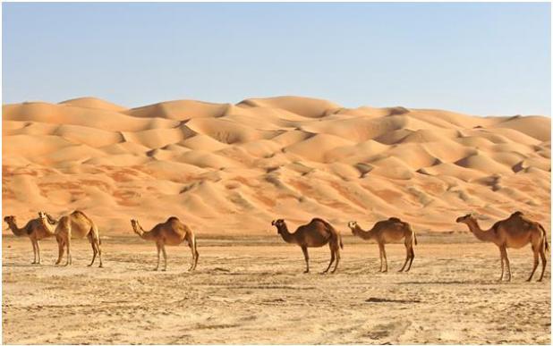تحتل صحراء الربع الخالي الثلث الجنوبي الشرقي من شبه الجزيرة العربية، تبلغ مساحتها 650 ألف كيلومتر عبر السعودية واليمن وعمان وا