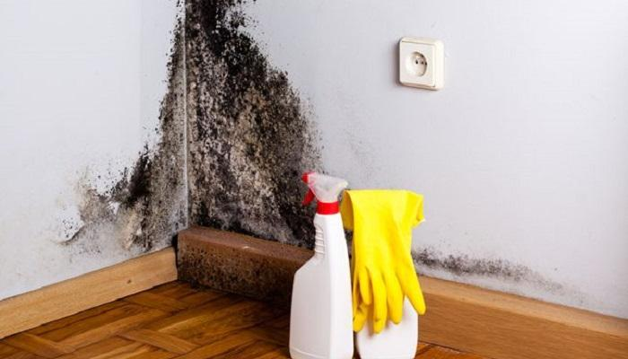 """نتيجة بحث الصور عن طريقة التخلص من العفونة السوداء على حيطان البيت"""""""