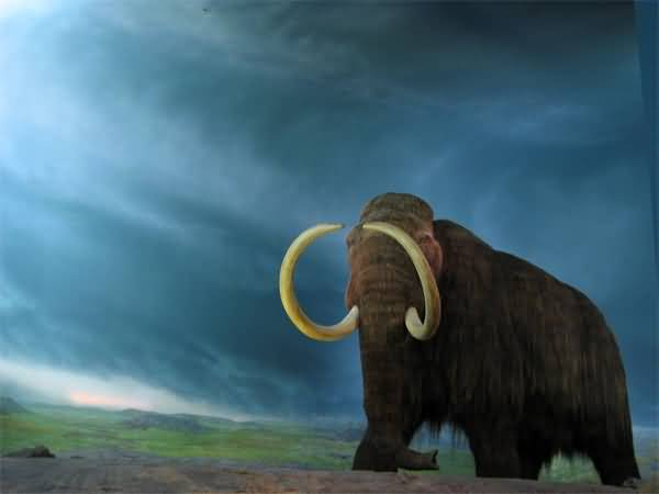 Top 5 Extinct Animals In The World   ALLRefer Woolly Mammoth