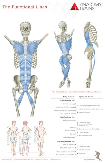 https://i2.wp.com/cdn.anatomytrains.com/wp-content/uploads/2014/01/posterfl1.png?resize=360%2C556&ssl=1