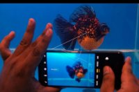 Pameran ikan mas koki – ANTARA News Bali