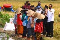Presiden tinjau petani di Malang