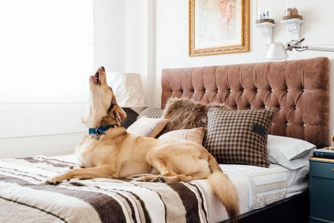 This First-Time Homeowner Built a Dog Room For His Pups