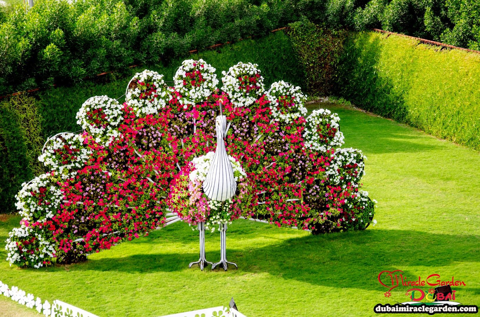 Easy Garden Design Ideas