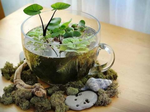 mini indoor garten + adorable miniature terrarium ideas for you to try