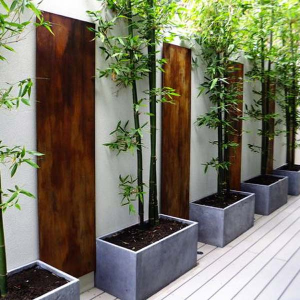 Wall Climbing Plants Your Garden
